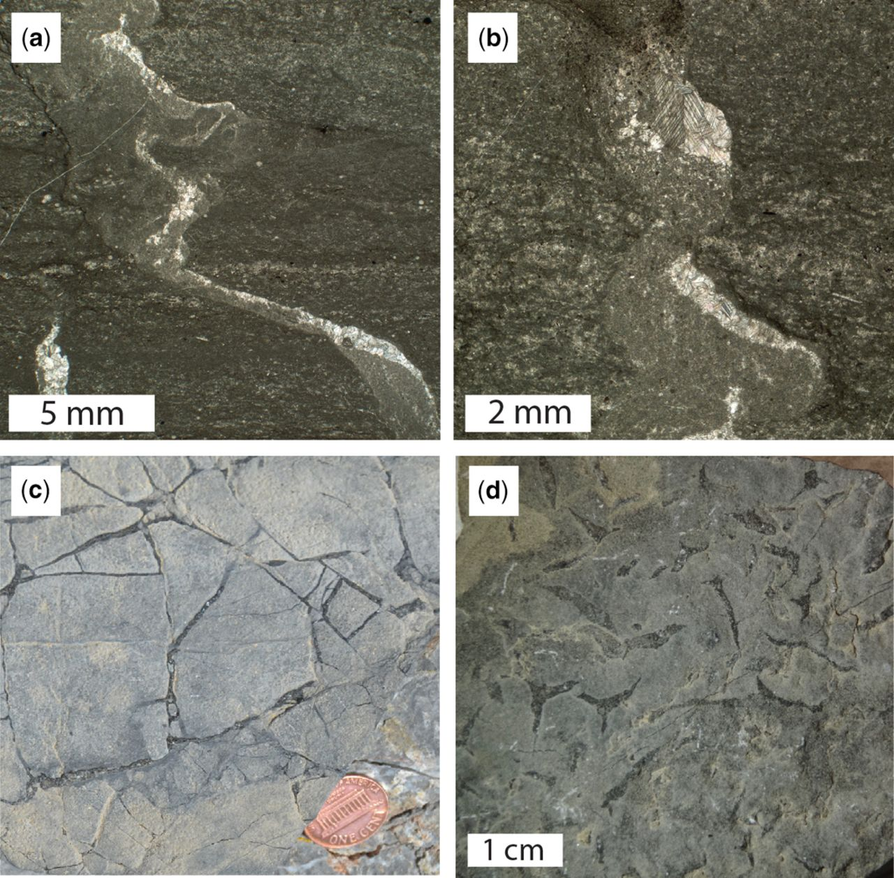 The origin and occurrence of subaqueous sedimentary cracks