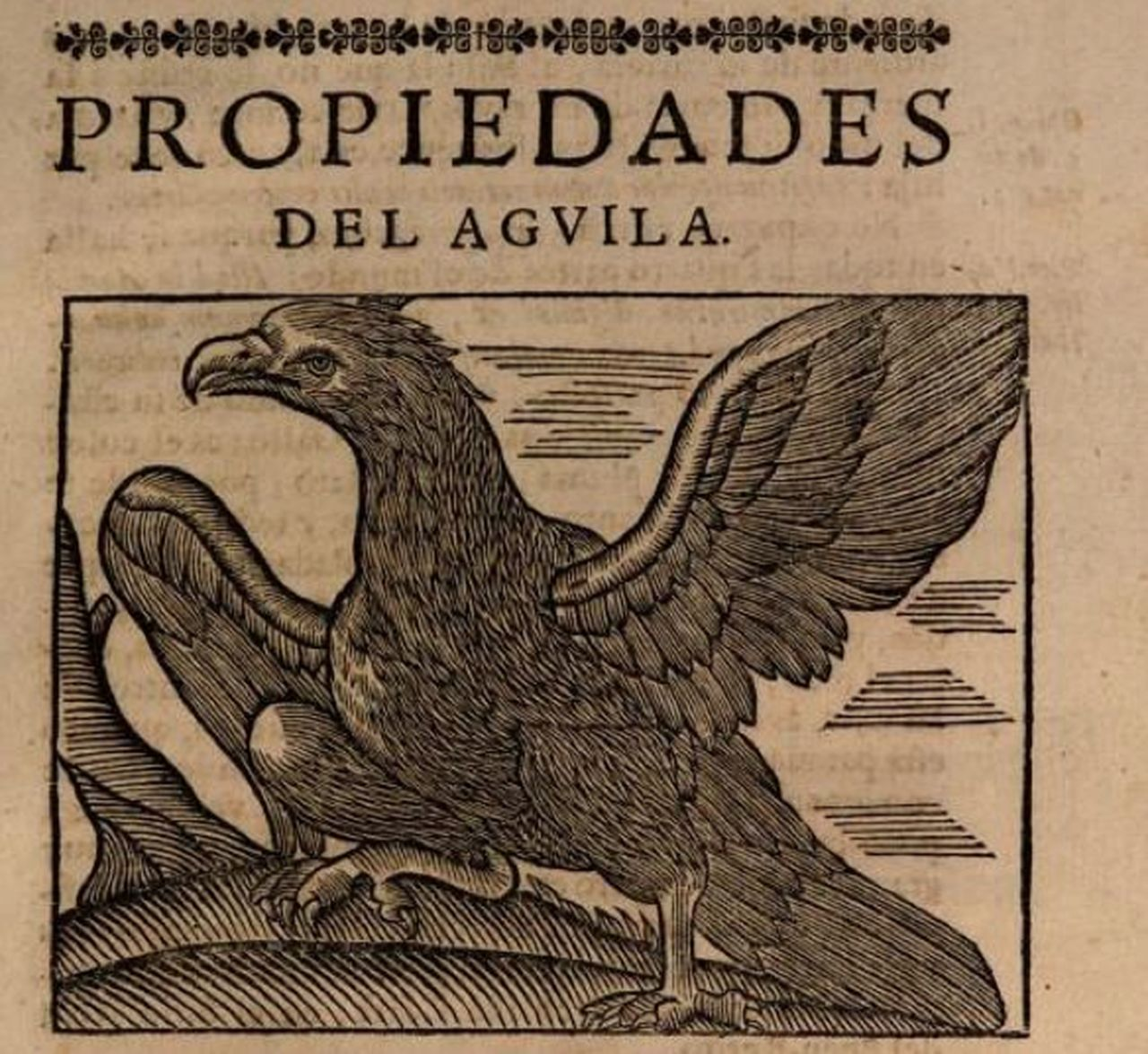 The name is the message: eagle-stones and materia medica in South ...